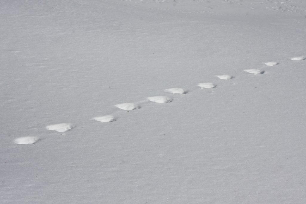 Spår i snön