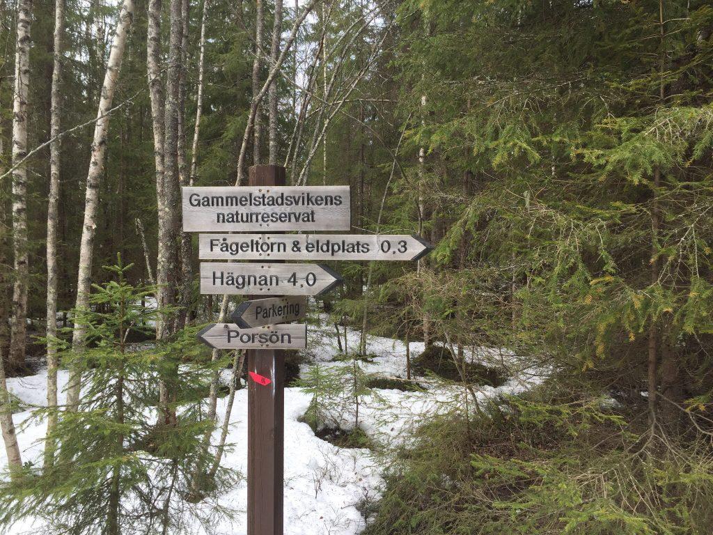 Fågelskådning i Gammelstadsviken Fågeltorn