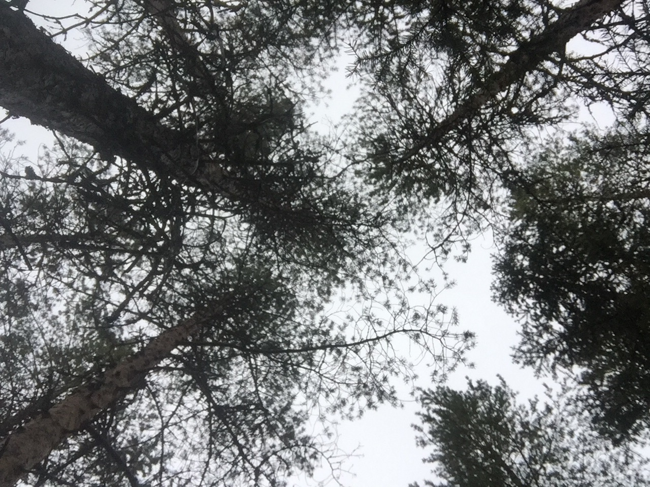 skogen mulle knopp knytte