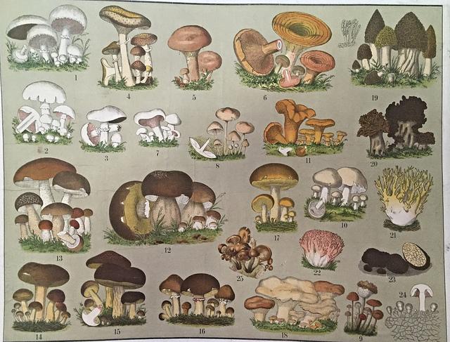 skolplansch svampar