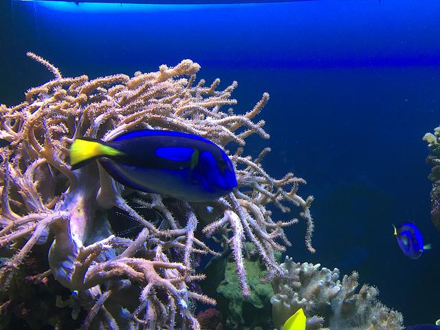 aquaria_2