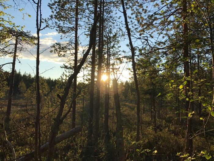 Solnedgång Boden Norrbotten