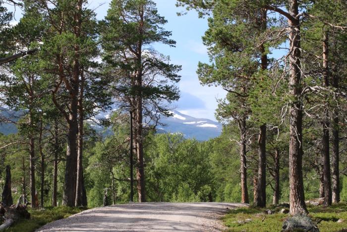 Naturum Laponia entré